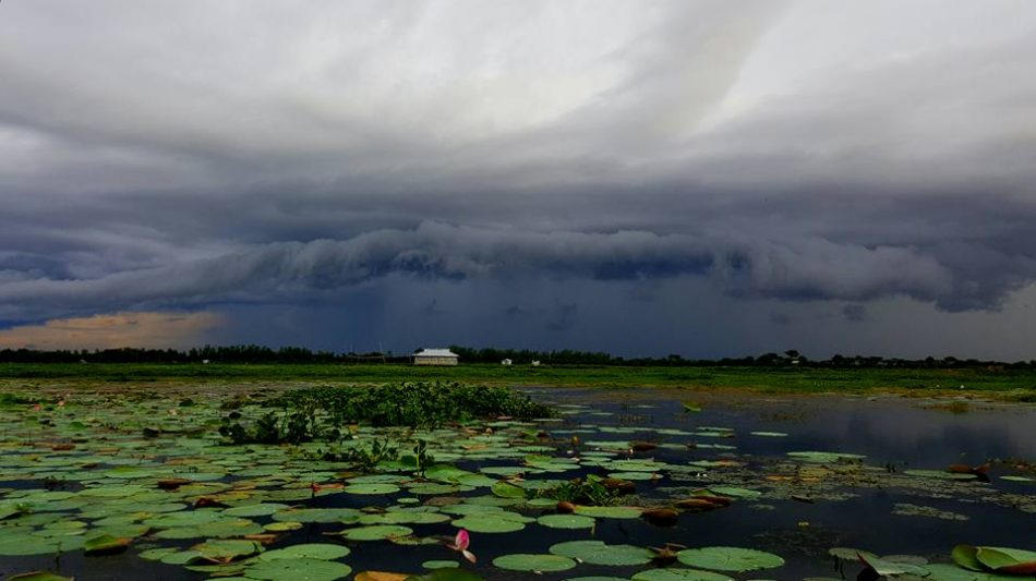 Dark Cloudy sky and lotus flower in the beel also a small house at a good distance in Baikka Beel Area, Srimangal, Moulvibazar, Bangladesh