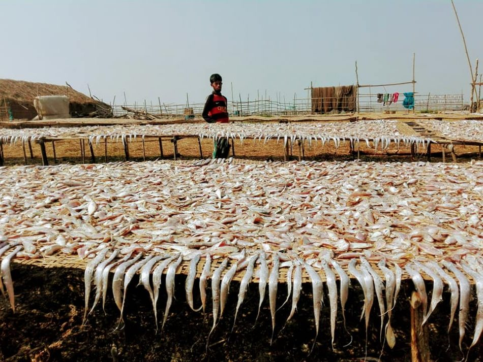 Many fish are in the sun, and it's called dry fish and a man standing behind, Sundarban, Bangladesh. A good travel destination.