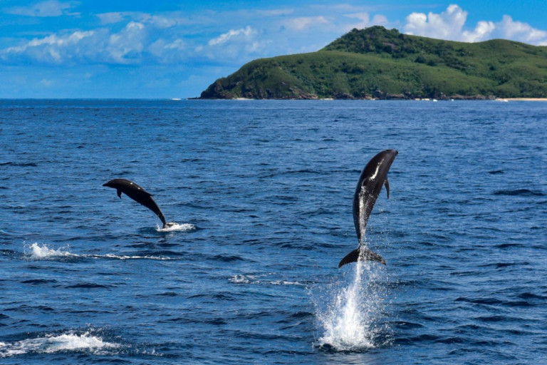 Awesome!! Best Things To Do In Outer Islands, Fiji